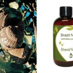 Έλαιο Brazil Nut Ethereal Nature